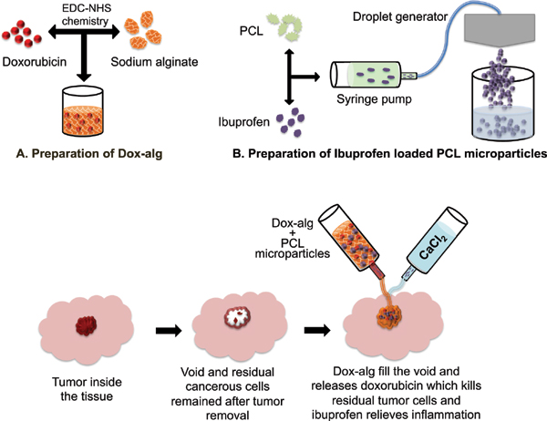 doxorubicin for drug delivery in cancer treatment The engineered nanoparticles are effectively used for cancer treatment due to their targeted drug delivery approach certain anticancer drugs, such as doxorubicin (doxil) and daunorubicin, are provided via liposomes liposomal cisplatin has received an orphan drug designation for pancreatic.
