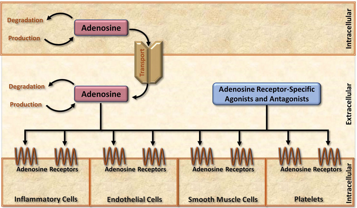 Home Page ::: Cardiovascular & Hematological Disorders-Drug