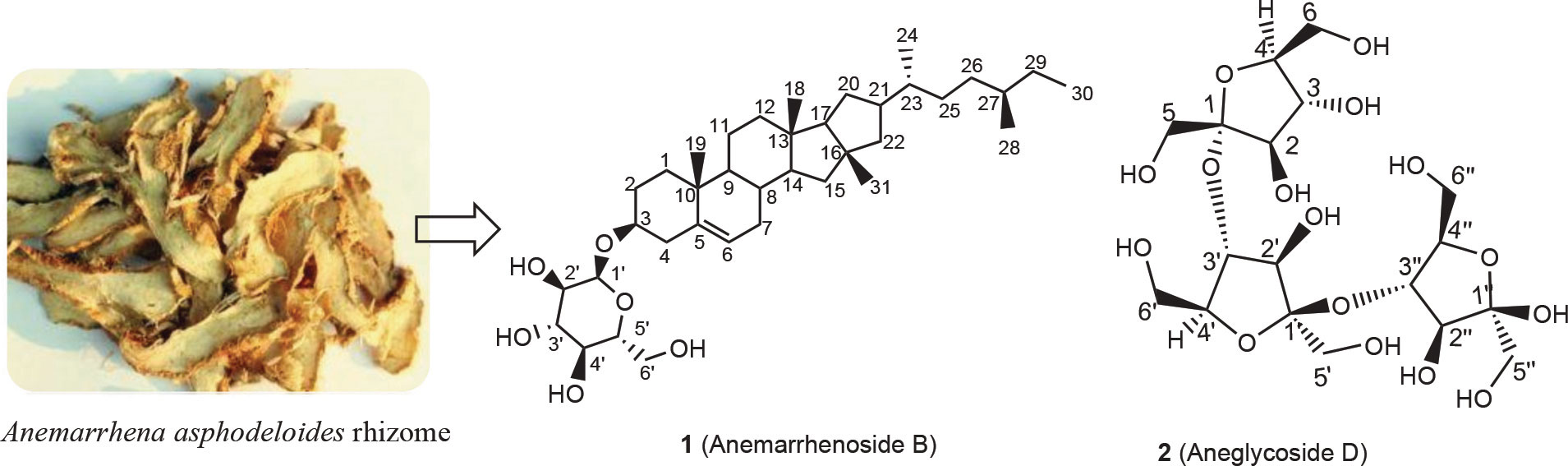 Isolation of New Glycosides from Anemarrhena Asphodeloides Rhizome and Screening of their Anticancer Activity